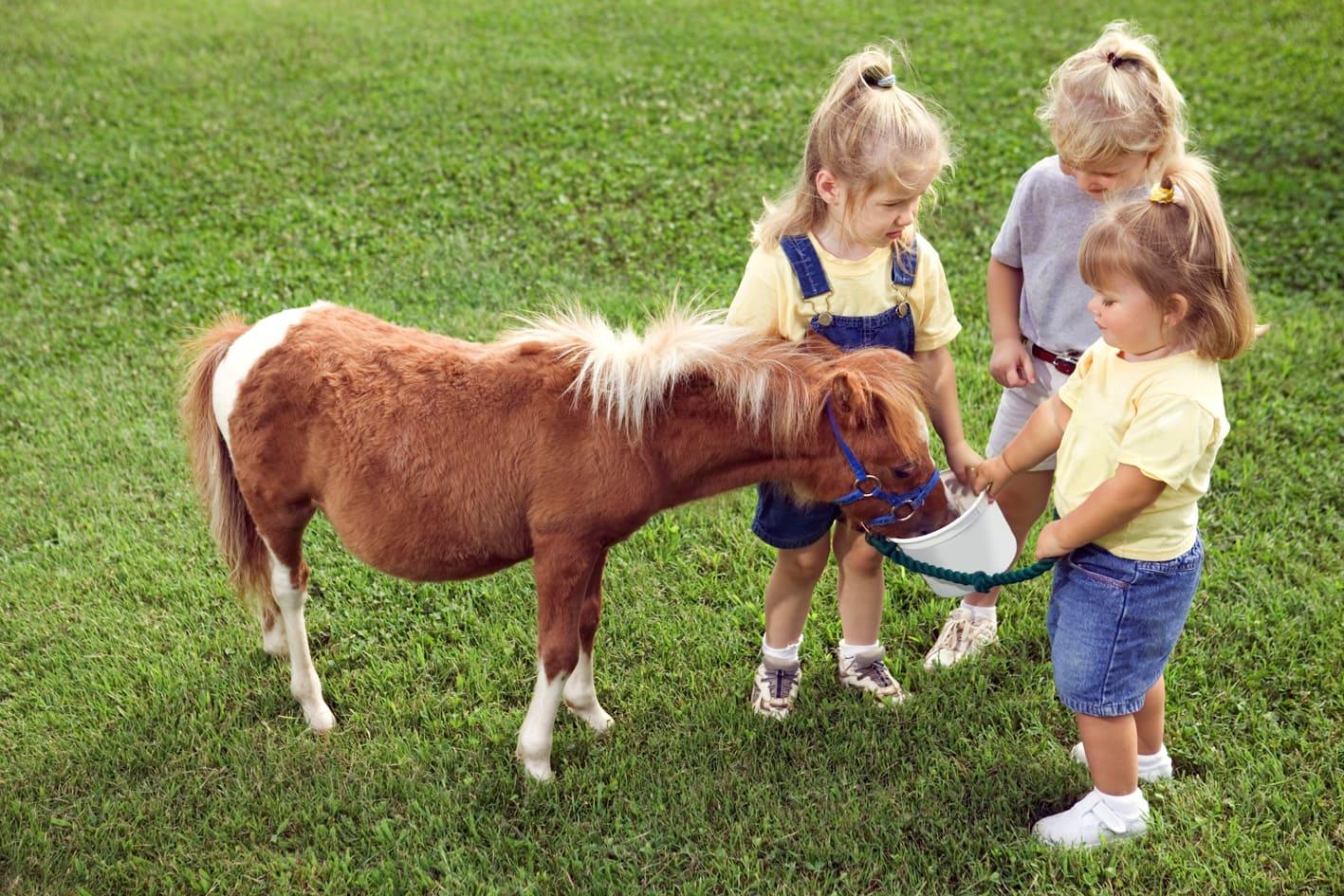 Дети и пони