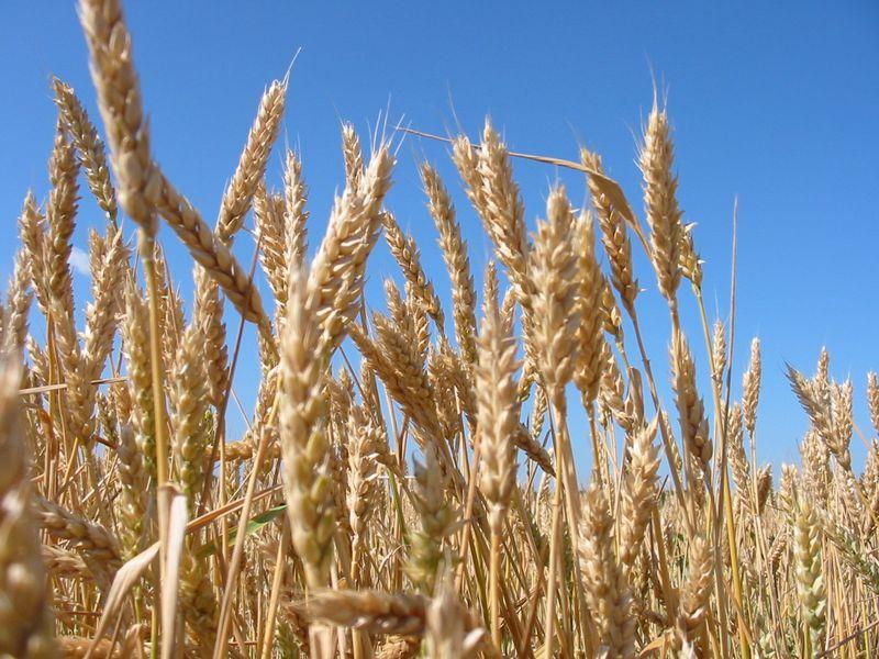 топик Сельское хозяйство