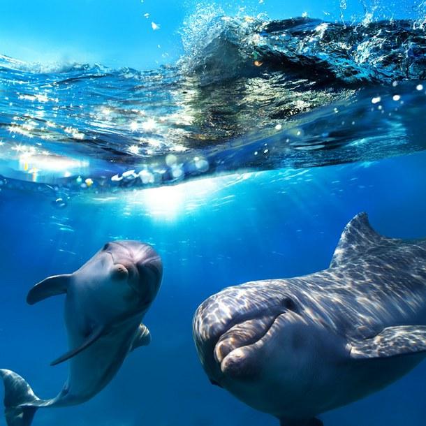 Рассказ про дельфина