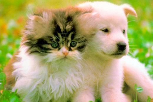 Животные, пример заботы