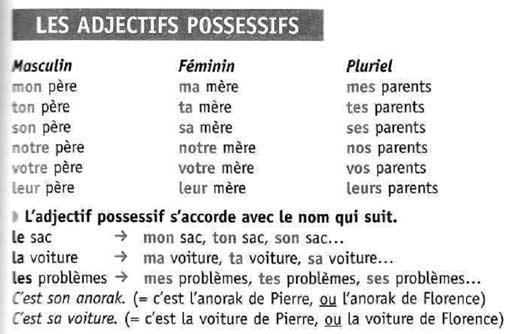 Притяжательные местоимения во французском